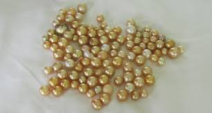 yellow pearl bracelet images Pearls into gold gold pearls south sea pearls yellow pearls jpg