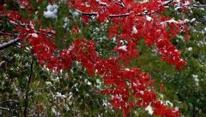 Bushes For Landscaping Bushes For Landscaping Outdoor Goods