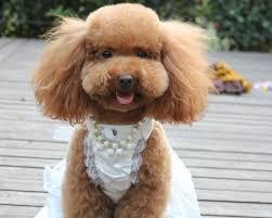 dog wedding dress neckline bow sequin pet dog wedding dress gown free