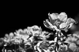 black and white photography pikapika20 u0027s blog