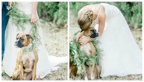cute ways to include your dog in wedding photos so sue me