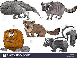 animal illustration beaver raccoon coon marten skunk