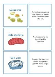 cell organelle function matching cards by jag education tpt