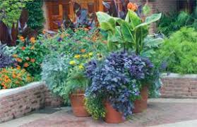 Ideas For Container Gardens Container Gardening Ideas For Sun Ixfrp Decorating Clear