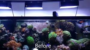 Aquascape Reef Hd New Aquascape Reef Aquarium 125 Gallon Youtube