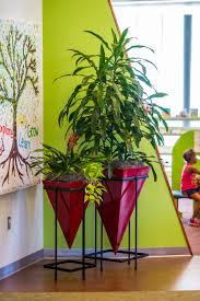 bedroom plants allergy free indoor plants plantation services