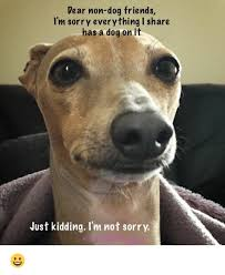 I Am Sorry Meme - dear non dog friends i m sorry everything i share has a dog on it