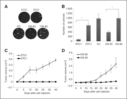 a mutation threshold distinguishes the antitumorigenic effects of