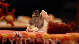 thanksgiving day video a tiny hamster thanksgiving is the best meal you u0027ll see all year