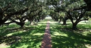 new orleans louisiana usa u2014 oak alley plantation old country