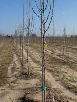 fiberglass tree stakes by ultrastake welcome