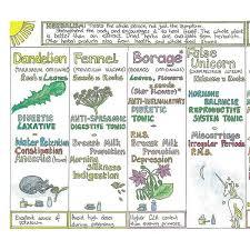 herb chart woman s healing herb chart g baldwin co