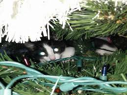 top 7 hilarious ways to protect the tree from cats and