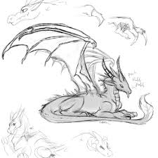dragon sketches 03 by fabman132 on deviantart