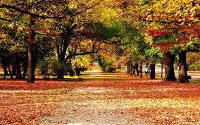 autumn nature wallpaper allwallpaper in 16440 pc en