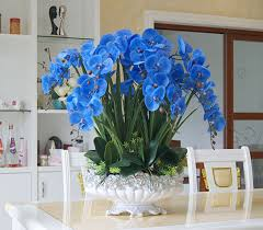 blue orchids for sale online shop high quality big size blue orchids arrangement