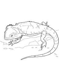 bearded dragon coloring free printable coloring pages