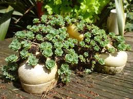 a garden less ordinary garden ornaments or tacky
