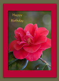 Card For Invitation Or Congratulation With Red Rose In Vintage Red Rose Birthday Card Free Stock Photo Public Domain Pictures