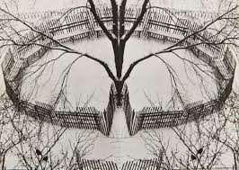 a winter garden new york andre kertesz james hyman fine art