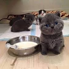 Feed Me Meme - who will feed me cutest paw