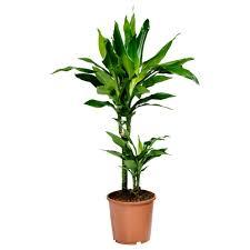 Unique Plant Pots by House Plant Fiorentinoscucina Com