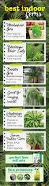 best indoor ferns guide for indoor greenery about the garden