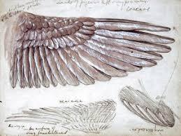 wing sketchuniverse