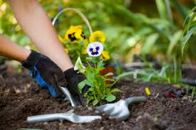 Gardening Tips For Summer - tips for summer gardening to prevent lower back pain sports