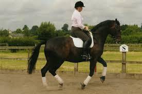 amanda brewer equestrian trainer