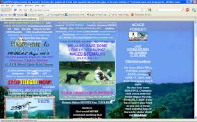 afghan hound good and bad on to bad graphic design momo u0027s world
