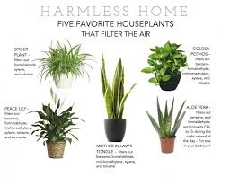 best plants for air quality great top 10 nasa approved houseplants for improving indoor air