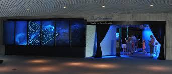 Wall Aquarium by National Aquarium Blacktip Reef Update A Reef Comes To Life