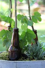 best 25 hops trellis ideas on pinterest hops plant vine fence