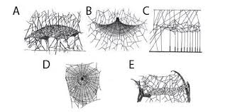 sheet types 1 different types of spider webs a a sheet web b a tent web of