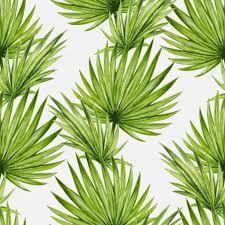 palm trees leaves u2014 stock vector karinacornelius 83801922