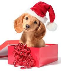 dog christmas desktop christmas dog pics dowload