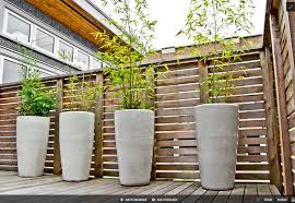bamboo in tall planters backyard dream pinterest planters