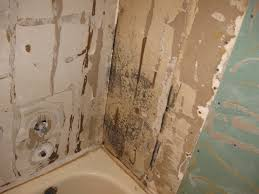 Remove Mold From Walls In Bathroom How To Remove Mold From Bathroom Walls The Ultimate Guide To Mold