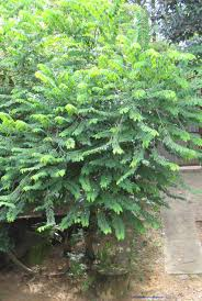 botany plant names sinhala plant names උද භ ද නම
