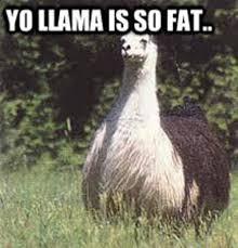 Llama Meme - funny llama memes 28 images best 25 llama meme ideas on