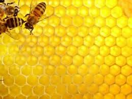 honeycomb edible is the honeycomb from a beehive edible shea butter philippines