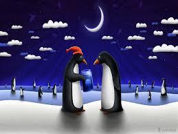 bird animals floe penguins night birds pictures cartoon hd 16 9