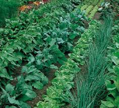 using crop rotation in home vegetable garden u2013 wisconsin horticulture