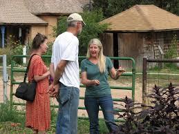 la veta art u0026 garden tour u2013backyard homesteading with kristina heim