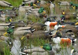 Underground Duck Blind 60 Best Decoys Images On Pinterest Mallard Ducks And Drake