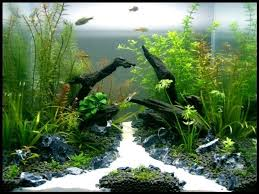 Aquascape Design Layout A Guide To Aquascaping The Planted Aquarium Freshwater Aquascaping