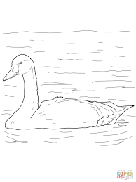 tundra swan arctic bird coloring page free printable coloring pages