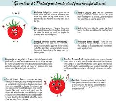 10 Tips For Growing Peppers by How To Propagate Your Bumblebee Organic Tomato Seeds U2013 Potomac Banks