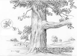 lets draw how to draw step by step pencil drawing course art